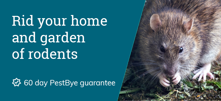 rodent repellent